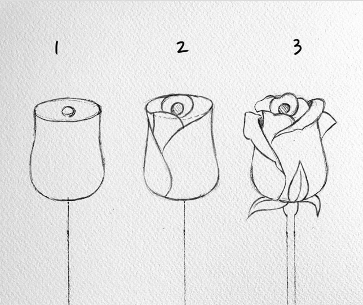 Pin By Mariana Meneses On Dibujo Naturaleza Flower Drawing Tutorials Flower Drawing Art Drawings Simple