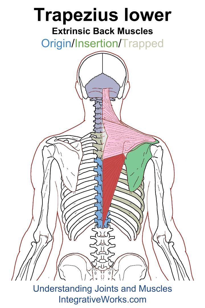 Understanding Trigger Points – Burning and itching along the ...