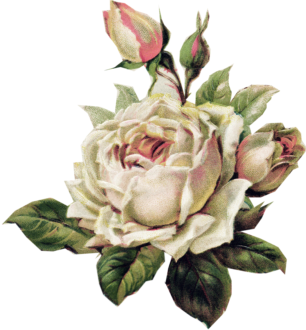 Pale Pink Rose Png 997 1077 Vintage Flowers Altered Art Christmas Vintage Roses