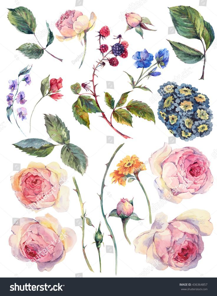 English Roses Watercolor English Roses Watercolor Englisch