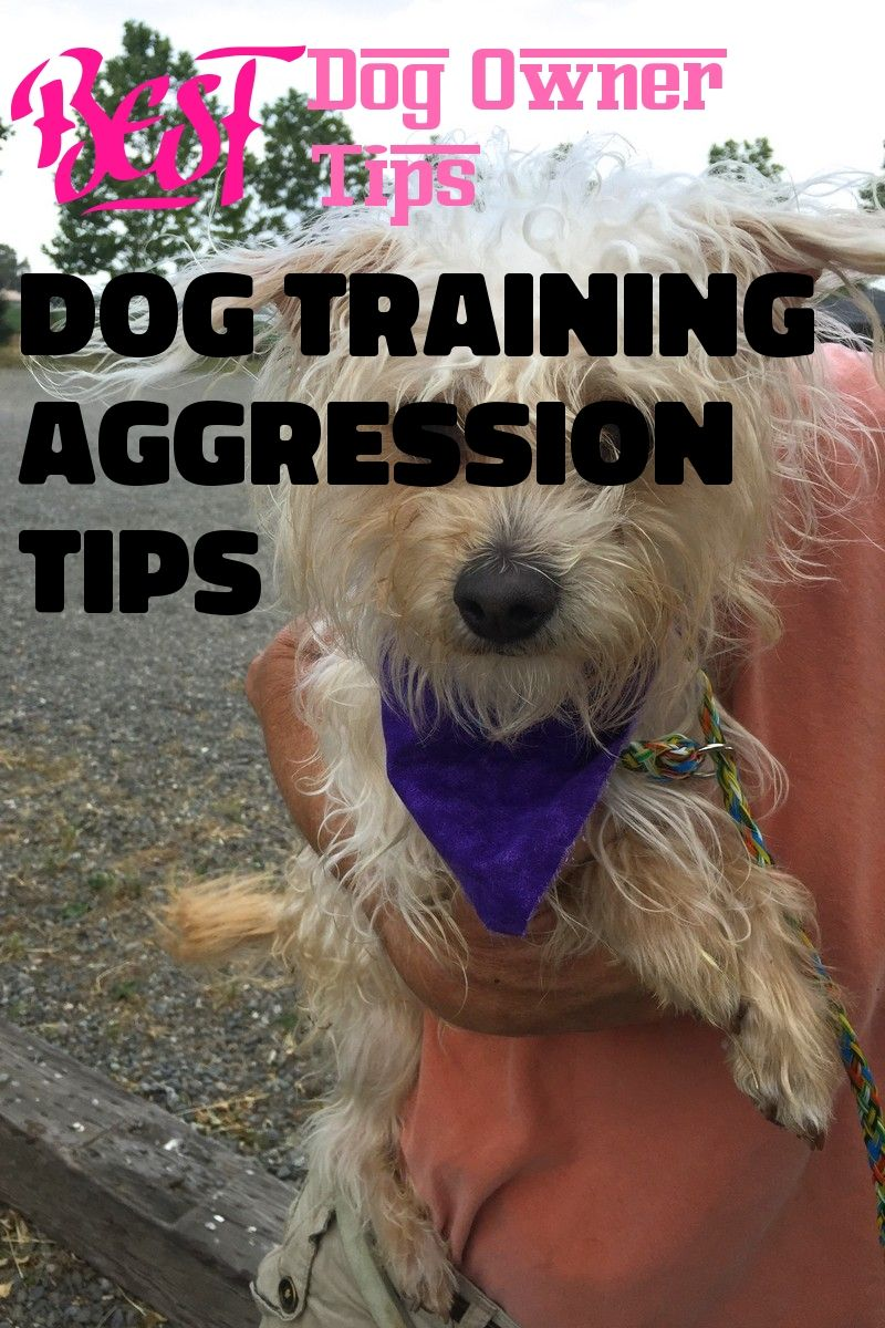 Do You Want A Pwt Stick To This Dog Training Aggression Tips