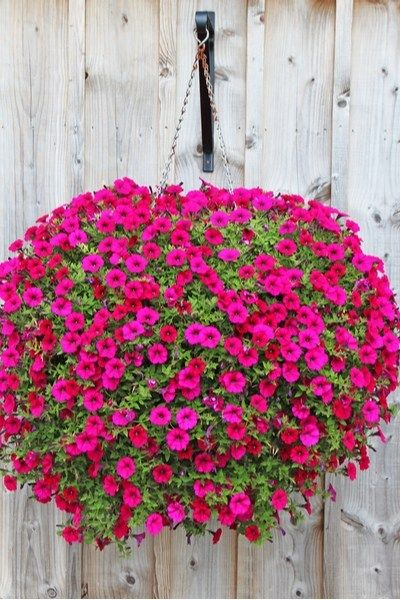 How To Replant Hanging Baskets For A Gorgeous Second Life!