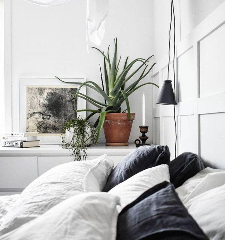 Aloe #Vera Pflanze fürs Schlafzimmer gesund luftreinigend ...