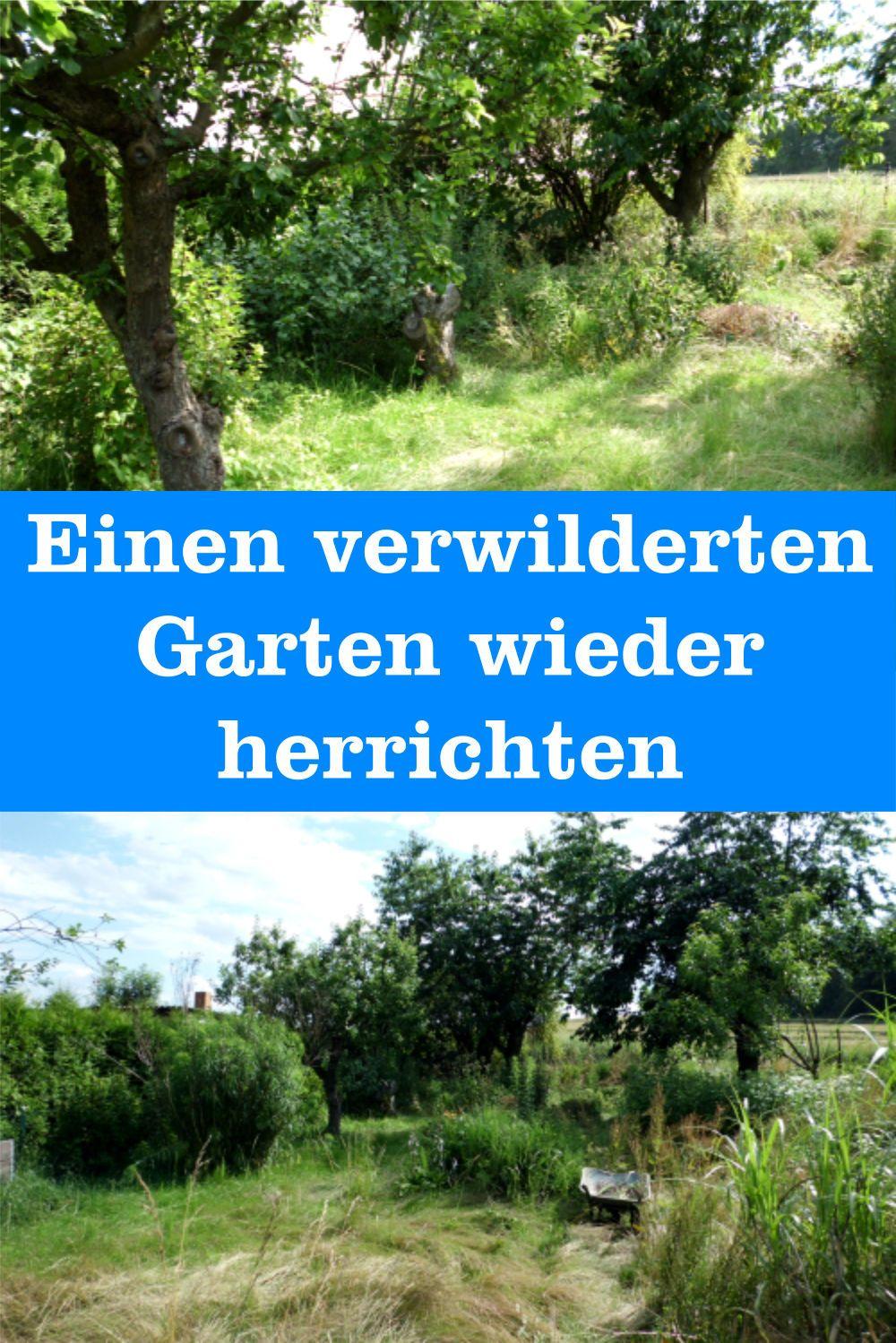 Einen Verwilderten Garten Wieder Herrichten Gartenbob De Der Garten Ratgeber Garten Garten Gestalten Gartenkunst