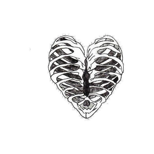 Ribcage Stock Illustration Illustration Of Anatomy Skeleton Drawings Anatomy Art Skeleton Art