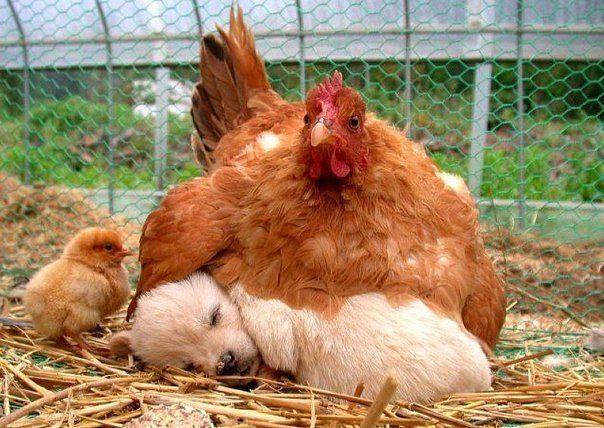 everyone need a mam