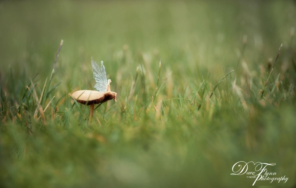 Real Fairies | fairy sitting on a Mushroom, spotted at my ...