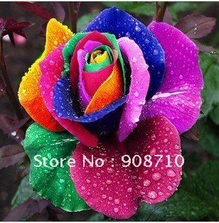 30PCS Flower/rainbow colors Roses seeds multicolour rose seeds Flowers planting free shipping $5.40