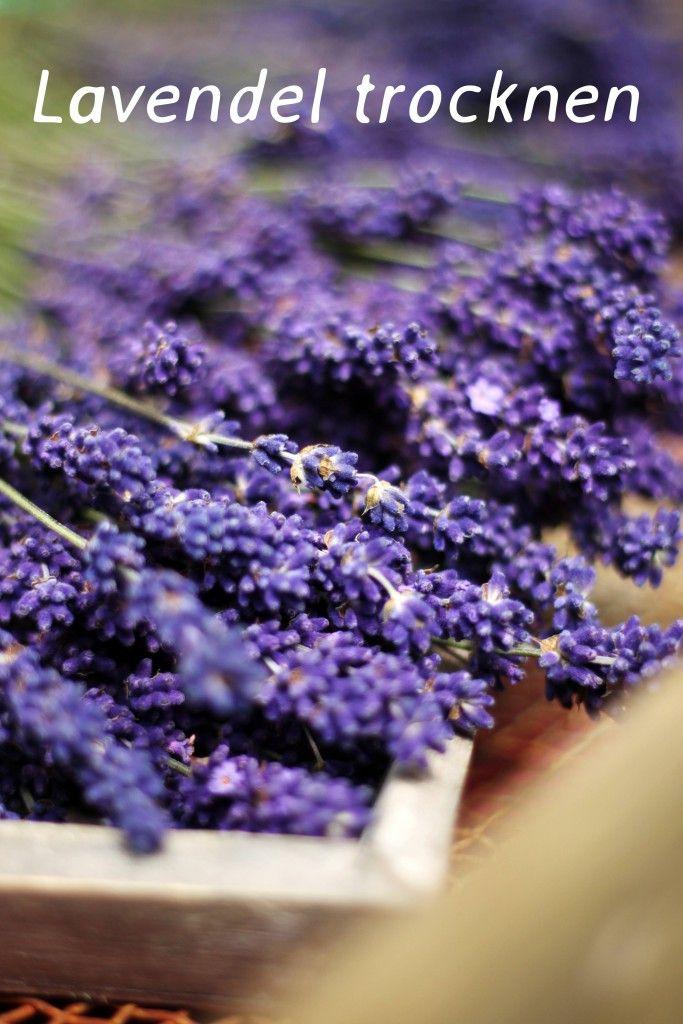 Lavendel Trocknen Diy Diy Blumen Sommerblumen Pinterest