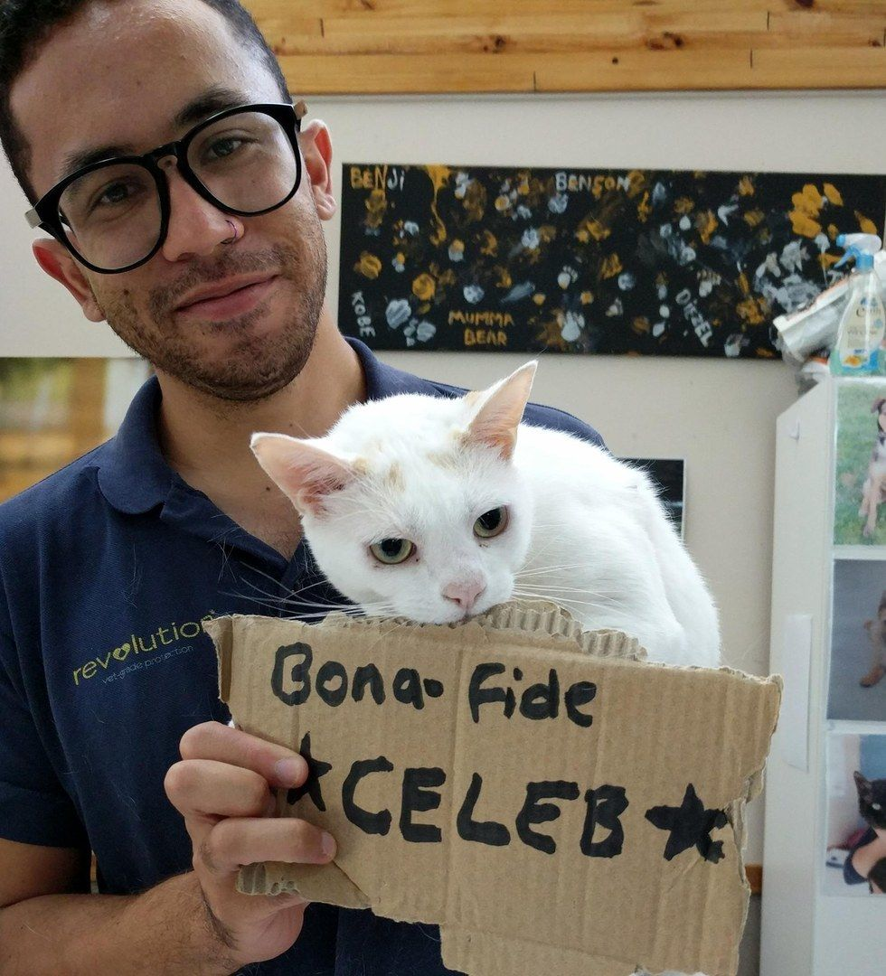 Shelter Tries To Find Home For Cat Who Has Been Waiting For Over 400 Days Animal Welfare League Cats Funny Animals
