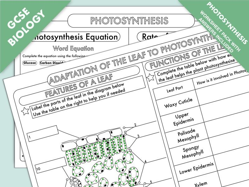 GCSE Biology Photosynthesis Worksheet Pack in 2020