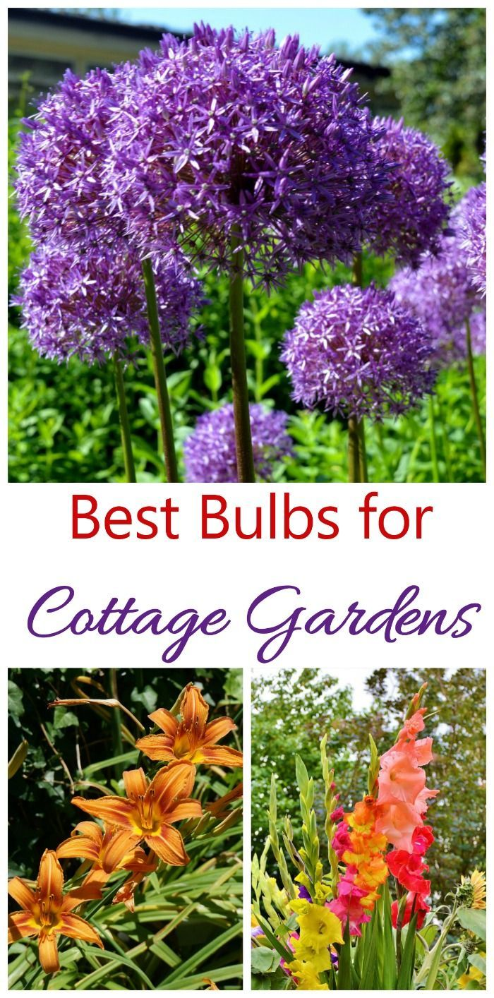 Cottage Garden Plants Perennials Annuals Bulbs For Cottage