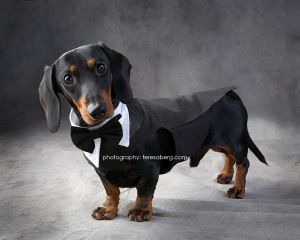 Adopt Onyx On Weenie Dogs Dachshund Dog Dog Love