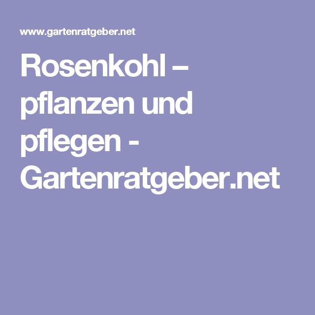 rosenkohl – pflanzen und pflegen, Terrassen ideen