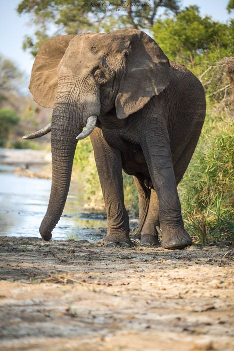 1st & 2nd November – Beautiful Summer Storms and Elephants!   Newmark