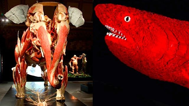 This is what a skinless elephant and a shark made out of blood ...