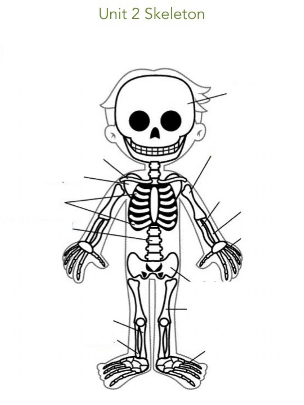 Unit 2 Skeleton Complete Interactive Worksheet Human Body Unit Science And Nature The Unit [ 1333 x 1000 Pixel ]