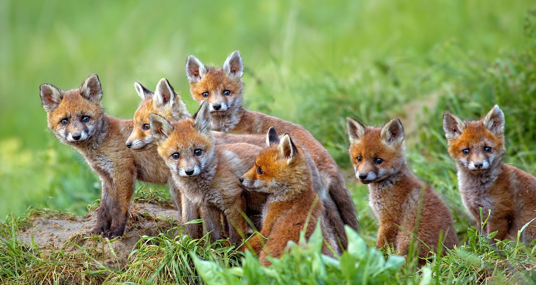 25 Of The Strangest Names For Groups Of Animals