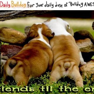 Daily Bulldog Photos On Facebook Yourdailybulldog You Ll Be A Fan
