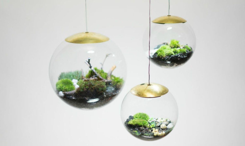 No room is too dark new terrarium pendant lights terraria grow
