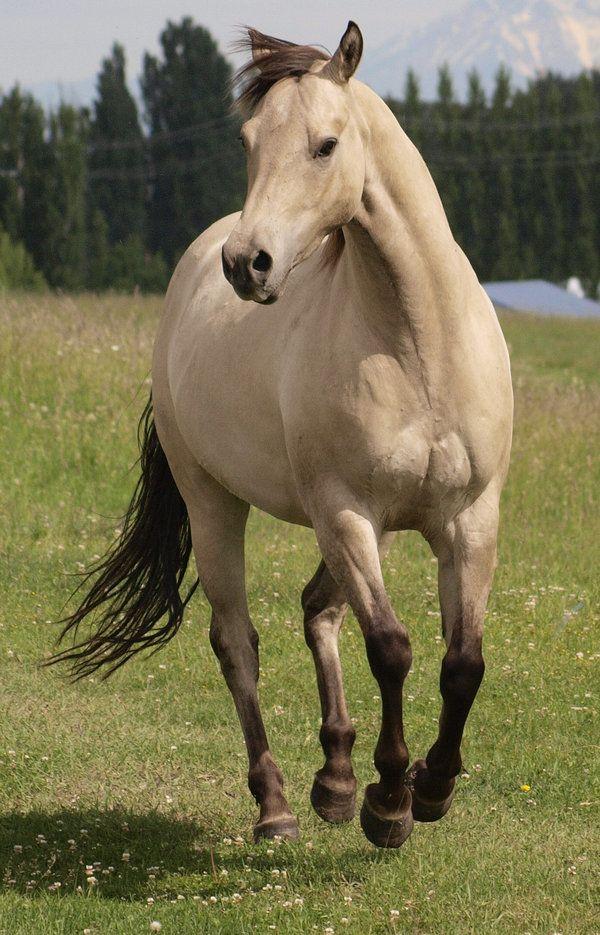 Tank 71 By Eltear Stock On Deviantart Horses Buckskin Horse Pretty Horses