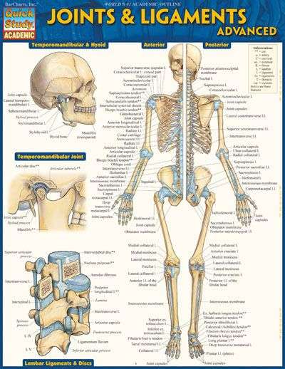 Joints Ligaments Advanced Joints Anatomy Human Joints Body Anatomy