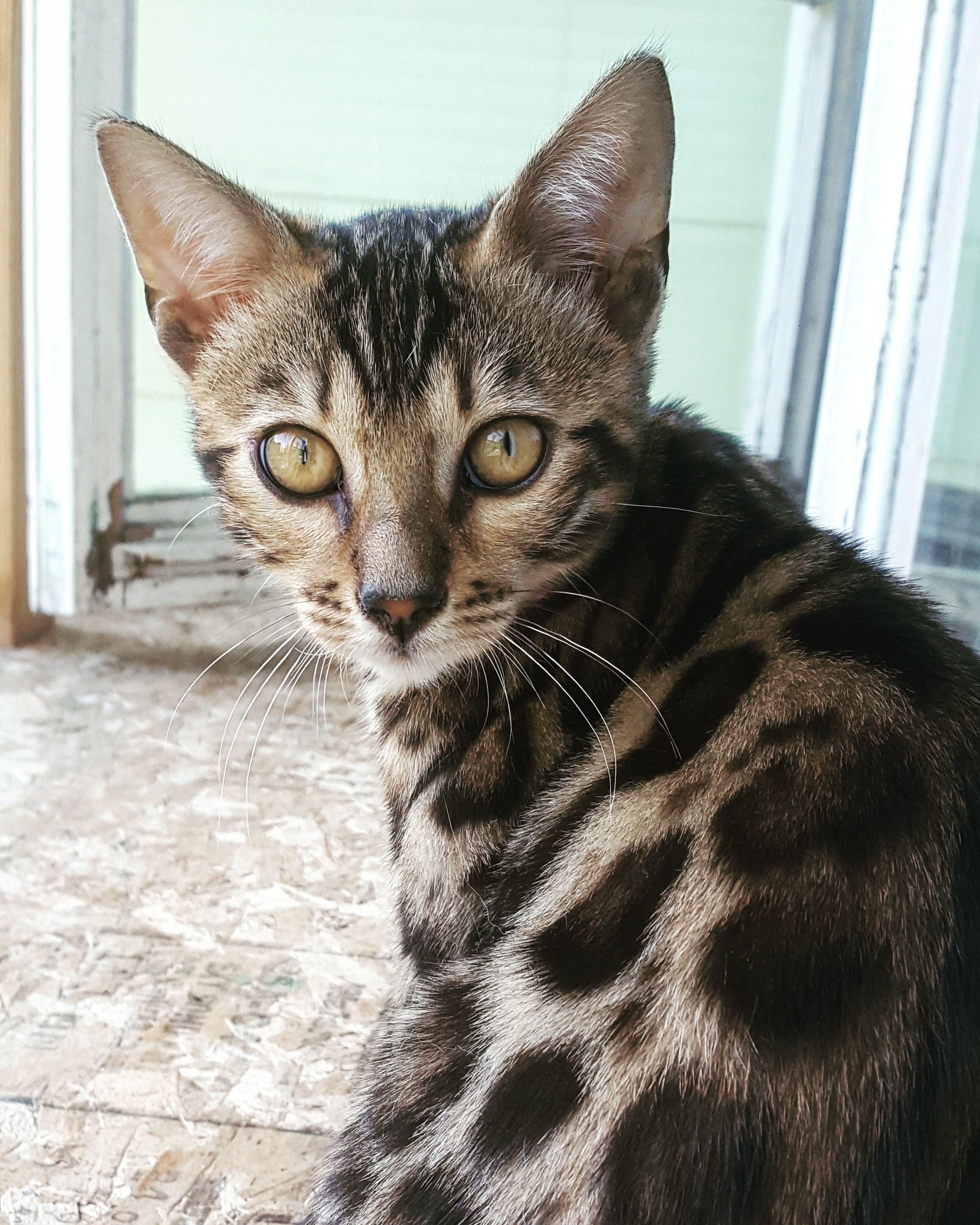 Reddit Meet My Moms Kitten Cleopatra Cats Kittens Cats
