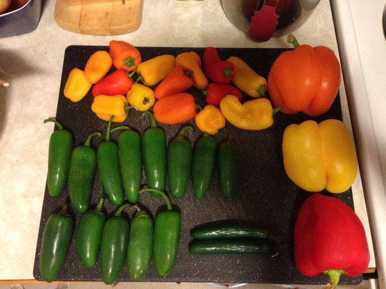 Fall favorites sugarfree pepper jelly stuffed peppers