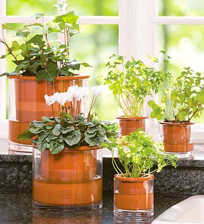 Great Ideas For Indoor Plants Decor