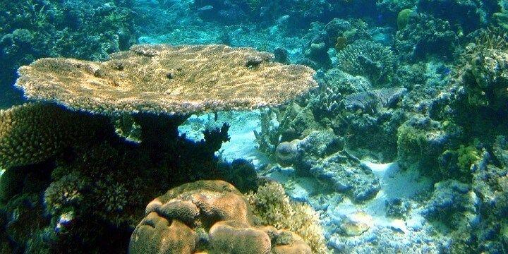Great Astrolabe Reef, Fiji