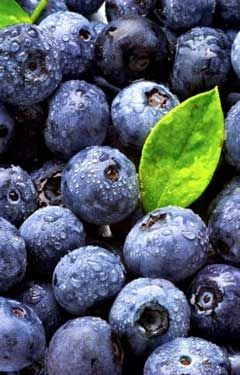 Beautiful, sweet summer blueberries.
