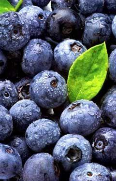 Beautiful, sweet summer blueberries.