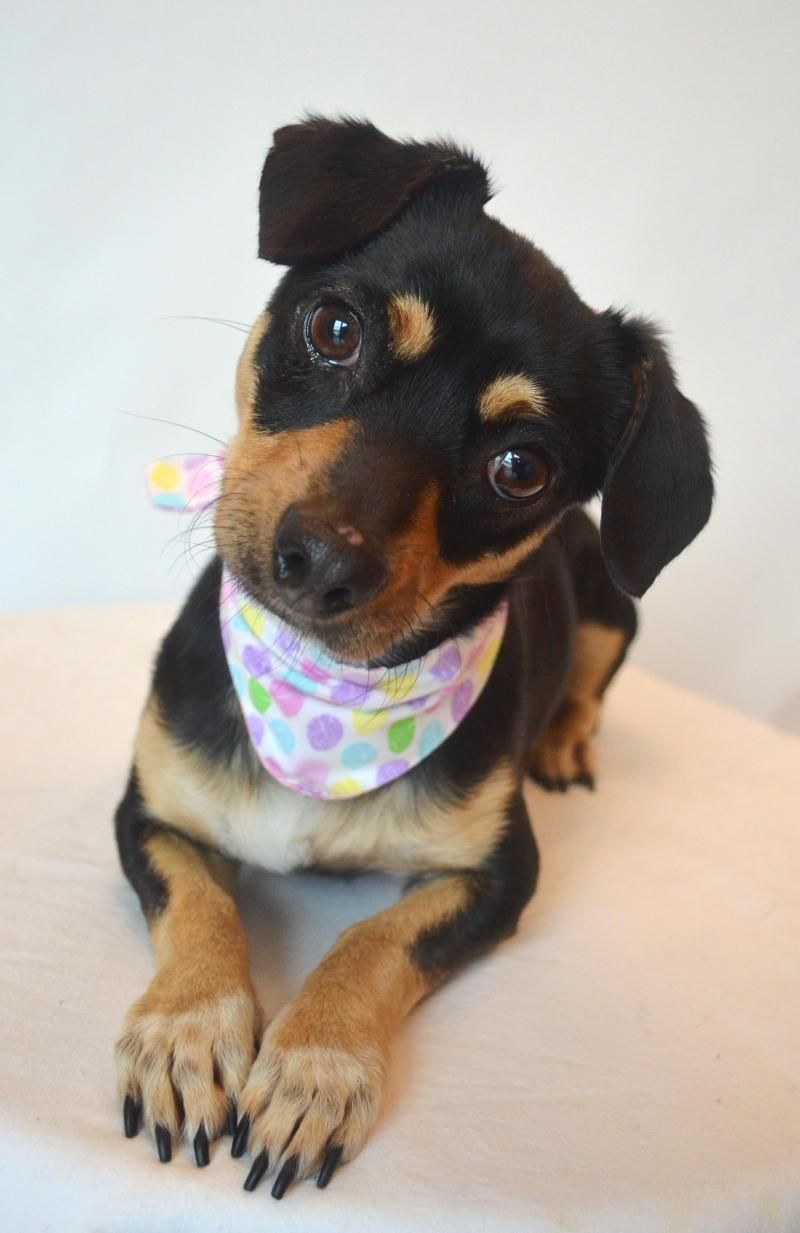 Adopt Bluebell on Pet adoption center, Pet adoption, Dog