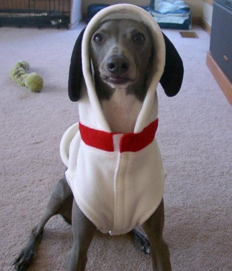 Snoopy Costume For Dog