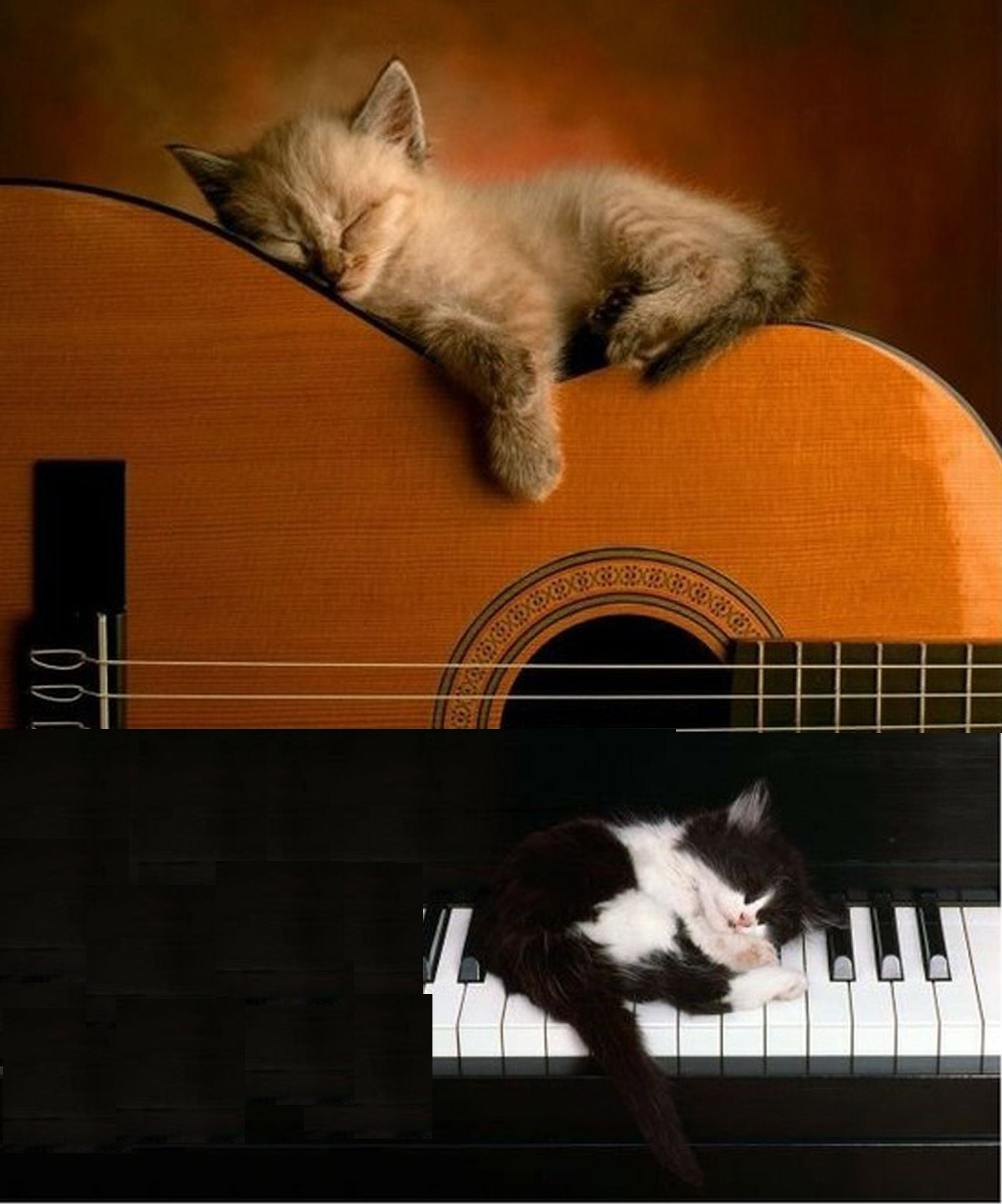 Your Instruments Can Be Used As Kitten Beds Ideal We Know Artwork Illustrations Musique