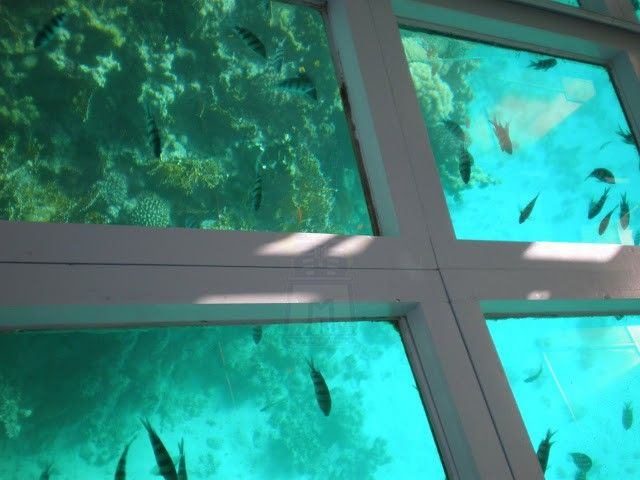 View From The Glass Bottom Boat In Buccoo Reef Tobago Caribbean Travel Glass Bottom Boat Trinidad And Tobago