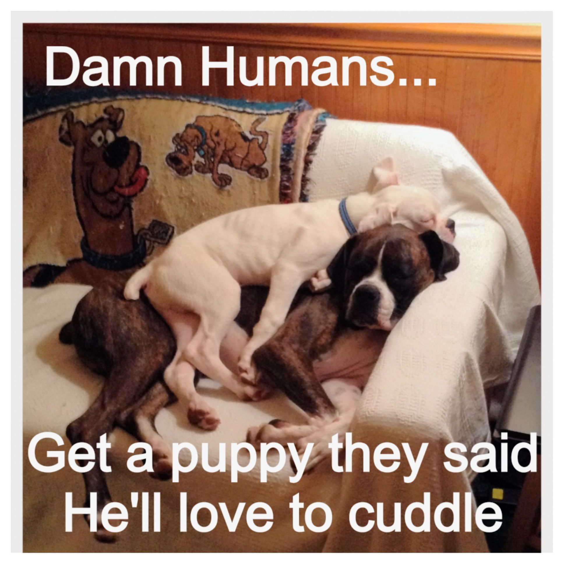 Why Do Dogs Trust Humans With Their Puppies