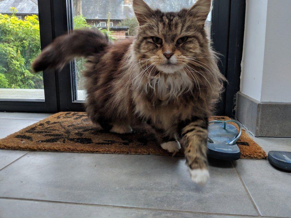 Ragdoll Kittens For Sale Manitoba
