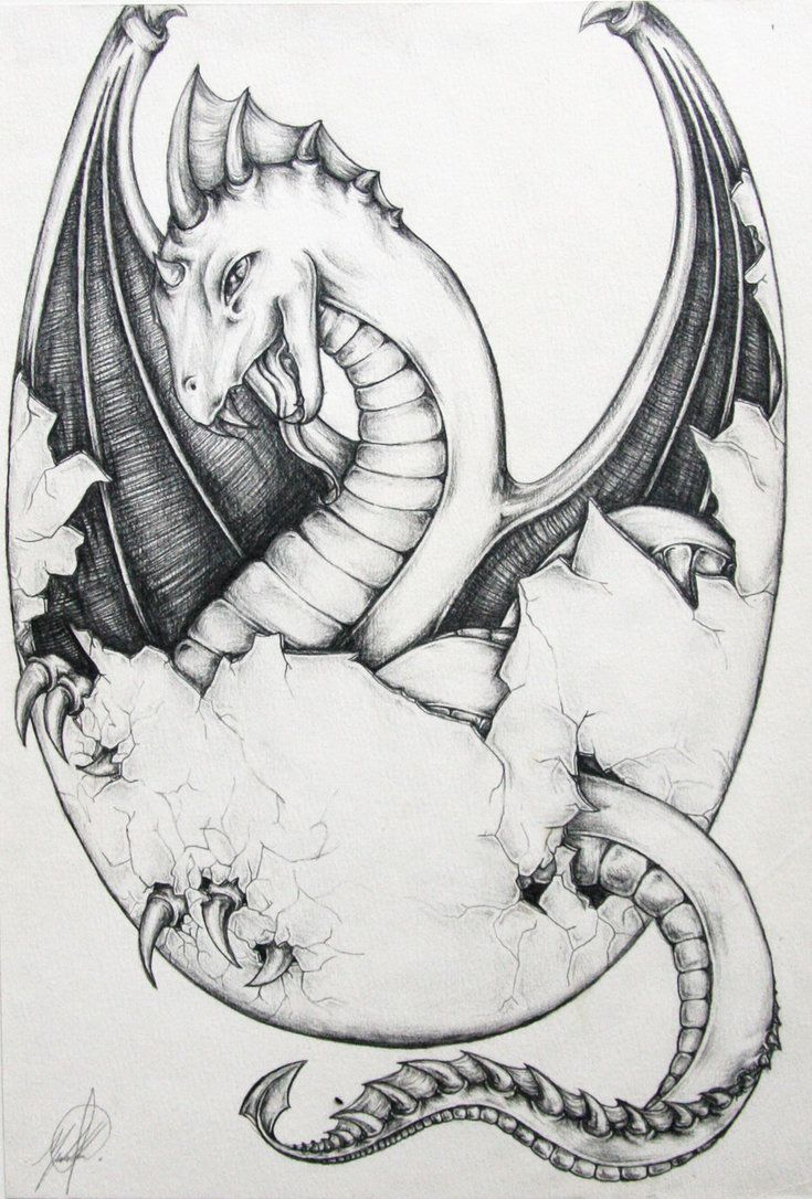 Raaawrrrr Baby Dragon Egg Vr2 Dragon Drawings In Pencil Baby Dragons Drawing Dragon Drawing