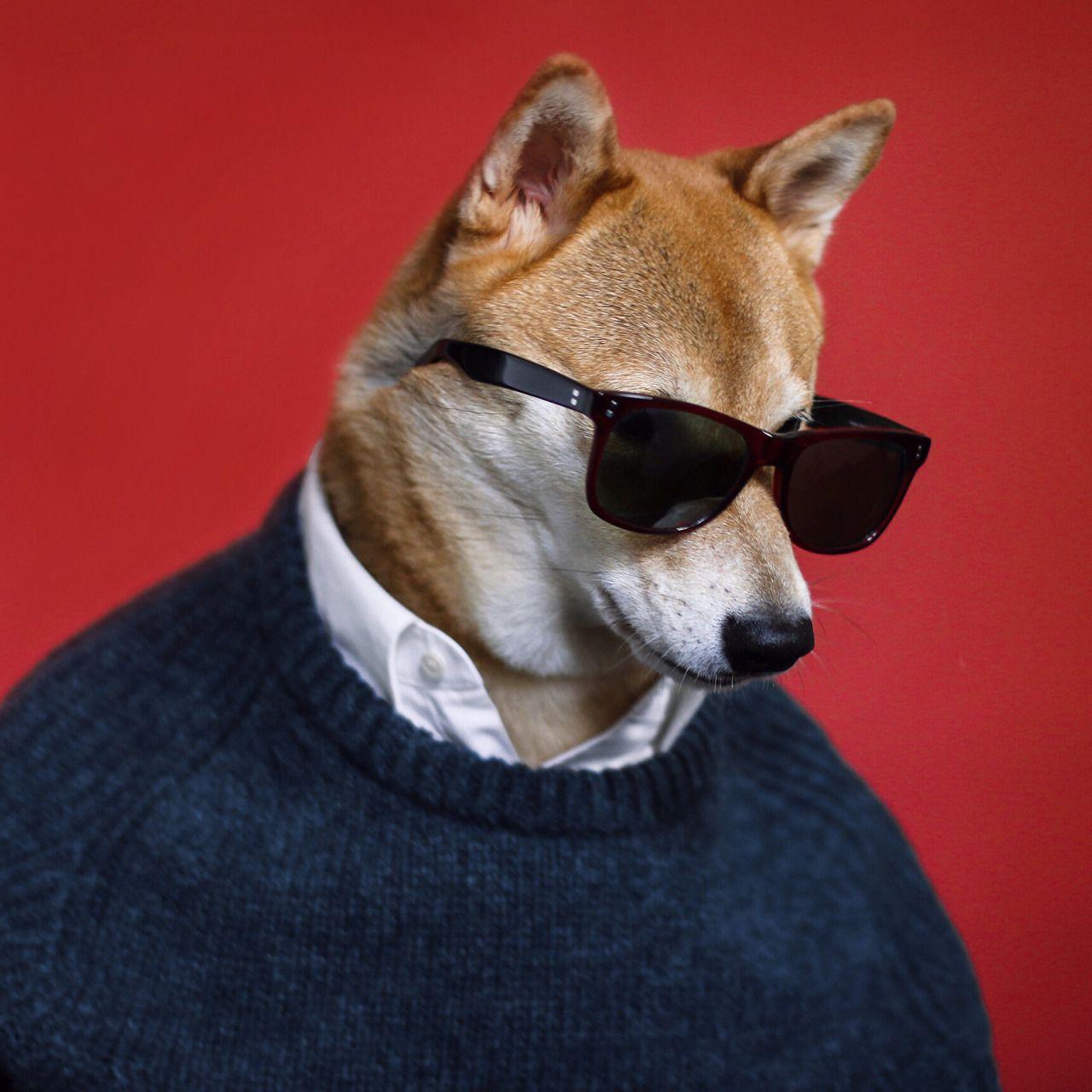 Pin By Gonobobel On Shiba Menswear Dog Stylish Dogs Dogs
