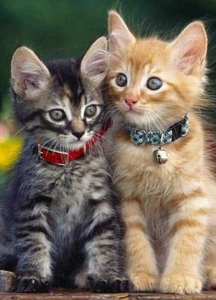 Two Cats In Love 26th June 2014 Kittens Cutest Cute Animals Kissing Cute Animals