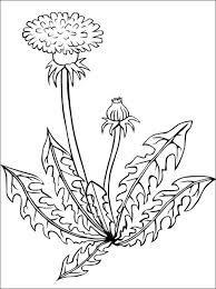 Mniszek Lekarski Kolorowanka Szukaj W Google Flower Coloring Pages Dandelion Drawing Flower Drawing