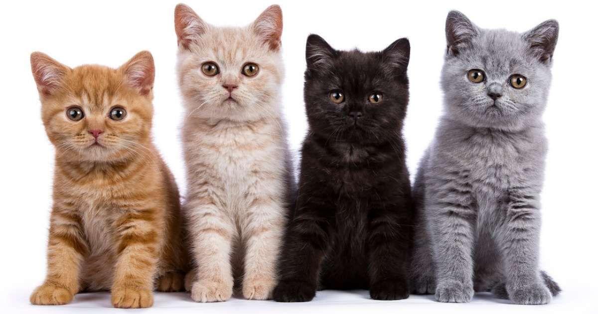 Download 99+ Gambar Kucing Yang Sangat Lucu Terbaik Gratis