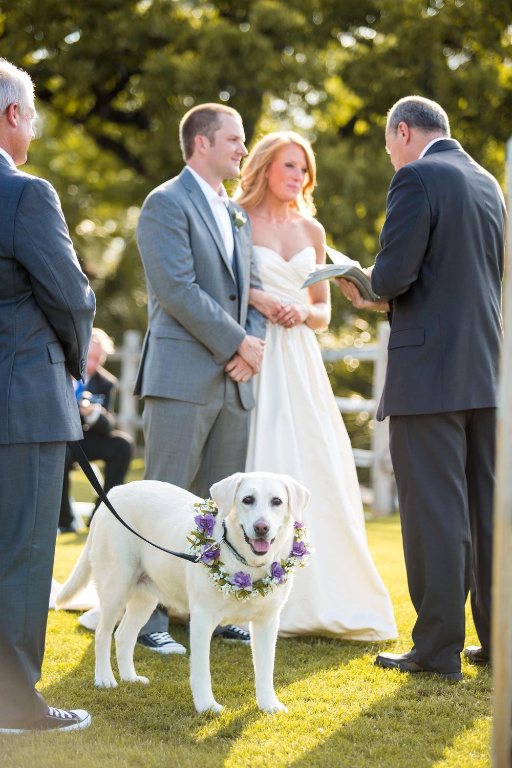 Beach wedding in texas  Wedding Dog in Horseshoe Bay Texas Ceremony  Puppy Love