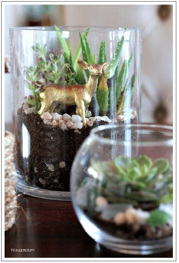 Dollar Tree Terrarium Tips Layering Succulents Twine