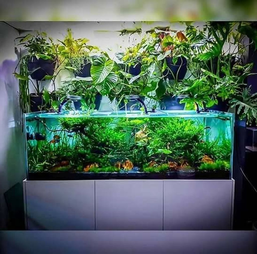 Home Aquarium Design Ideas: 42 Amazing Aquarium Design Ideas Indoor Decorations