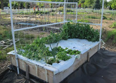 Welcome to Above Ground Farming - Journal - Building a sub-irrigated raised bed planter