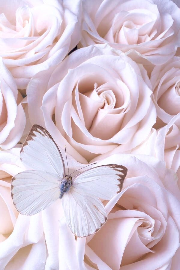 White butterfly (With images) | Flower phone wallpaper ...