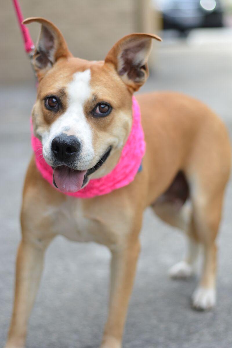 Adopt MinaADOPT Me! on Adoption, Labrador retriever, Pets