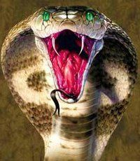 cobra striking cobra striking matthew gray gubler pinterest